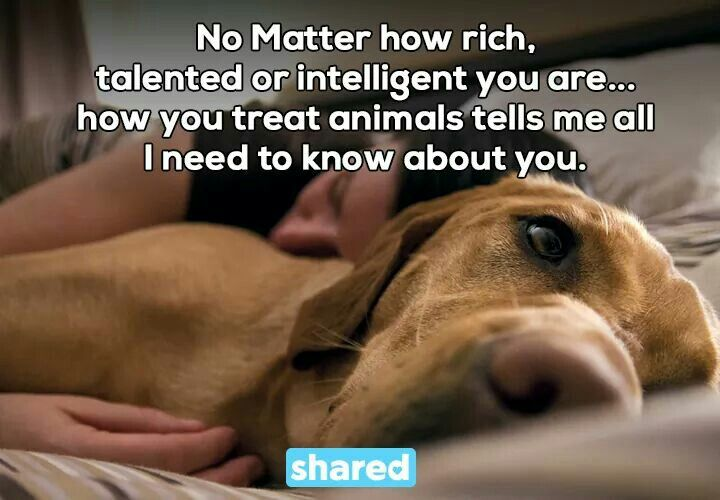 How you treat animals