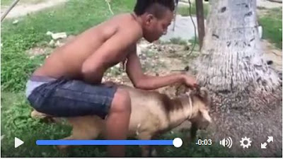 Man has sex with cat video