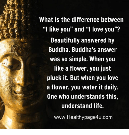 Difference between i like you and i love you