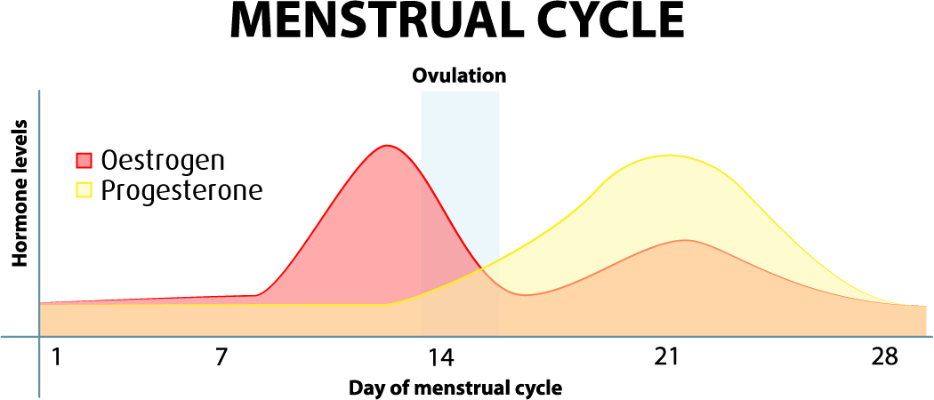 Does your cycle change after becoming sexually active