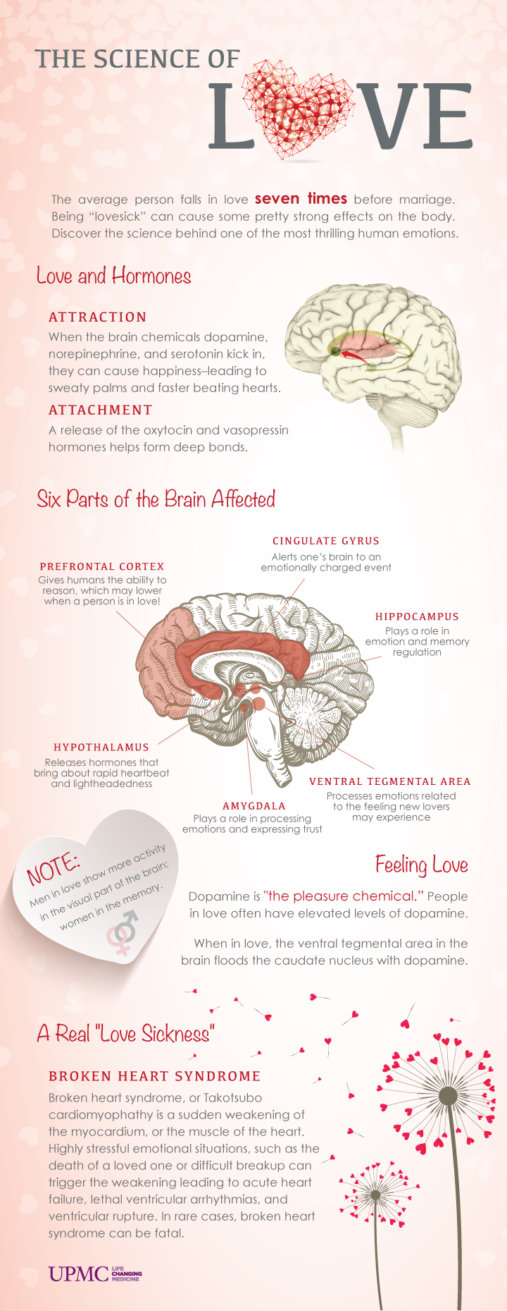 The science behind love